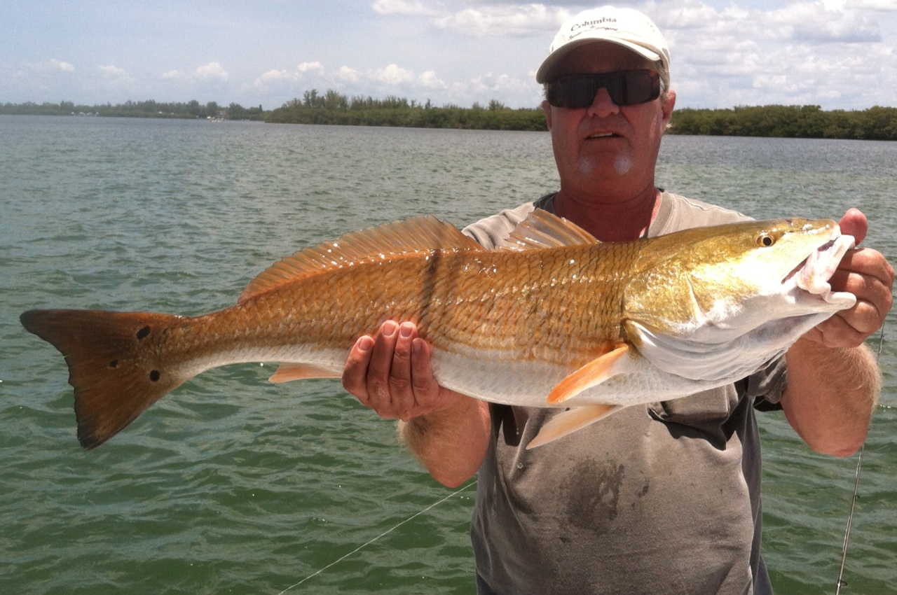 Tampa bay fishing bradenton fishing anna maria island for Fishing report tampa bay
